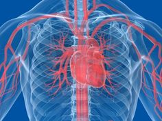 Reverse aging? Scientists discover protein that could turn hearts younger.