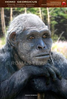 1758 Best Human Evolution images in 2019 | Human evolution