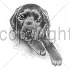 Black Lab Puppy Dog T SHIRT  Item no. 875j - pinned by pin4etsy.com