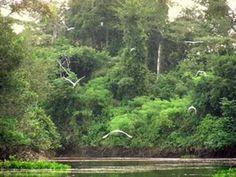 Heitor Villa-Lobos. Floresta do Amazonas. Maria Luisa Tamez / OSNM / E.A. Diemecke.