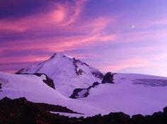 fotos violetas - Google Search