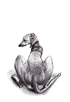 My pen and ink artwork of a greyhound called Cautious Cooper.
