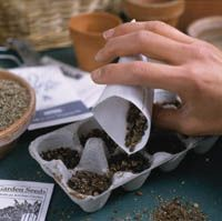 Growing Perennials from Seed. Includes list of perrenials that are easy to grow from seeds