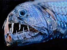 weird deep sea fish