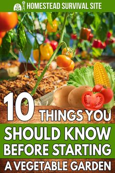 GrowVeg has hundreds of videos about gardening. Here, he shares some tips that would have made his first garden a lot more successful. Starting A Vegetable Garden, Urban Homesteading, Plant Needs, Homestead Survival, Planting Seeds, Grid, Backyard, Gardening, Vegetables