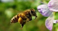 Afbeeldingsresultaat voor bijen