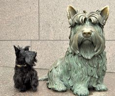 Dog with FDR memorial Scottish Terrier Statue in Washington DC