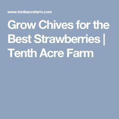 Grow Chives for the Best Strawberries | Tenth Acre Farm
