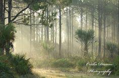 Florida Wilderness