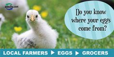 Go Local this Easter! You Know Where, Did You Know, Farmer, Seasons, Fun, Animals, Animais, Animales, Animaux