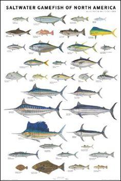 pesca de água salgada AN