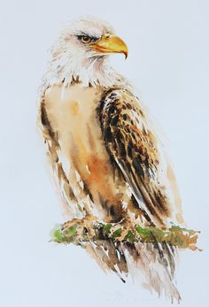 Eagle painting, bird watercolor, bird print art, watercolor, art print size inches for - ART Watercolor Painting Watercolor Drawing, Watercolor Bird, Watercolor Animals, Watercolor Paintings, Watercolor Portraits, Watercolor Landscape, Abstract Paintings, Oil Paintings, Eagle Painting