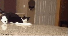 New GIF tagged via Giphy http://ift.tt/1Xnzakx