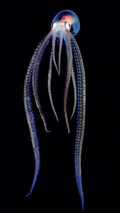 sea creature...