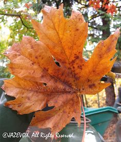 ARTICLE: The Signs of Fall #brown #dead #leaves #leaf #autumn #season VIEW original post at http://www.gardenersland.com/2007/11/signs-of-fall.html