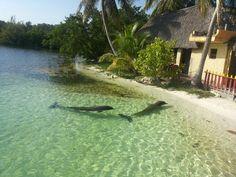 Dolphins / Cayo Largo Cuba