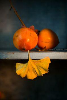ginko et kaki © Laurence David | Flickr: partage de photos!