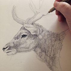 Deer in progress. Illustration af Draw Doodles Study