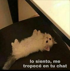 Cute Cat Memes, Stupid Funny Memes, Funny Posts, Meme Faces, Funny Faces, Animal Quotes, Animal Memes, I Love You Baby, Spanish Humor