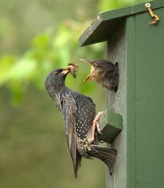 Baby Bird Feeding Time | Content in a Cottage