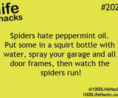 But I would probably rather die than watch spiders run. :\