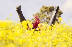 Me gusta la frescura que transmite, los colores alegres el desenfoque en las flores