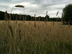 Field of bread