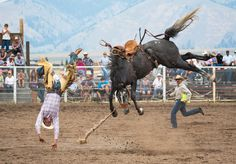 A champion bronco bucks a champion rider at the Helmville Rodeo (Helmville, Montana, Sept. 2013)  Photograph by Carol Lynne Fowler (Seeley Lake, Montana). FINALIST: Americana