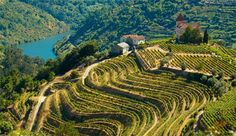 Douro Valley, Portugal Wine Travel Guide
