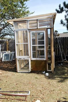 greenhouse made from old windows | As to the plants, it is working wonderfully for growing huge tomatoes ...