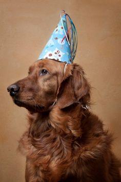 Birthday Dog with hat!