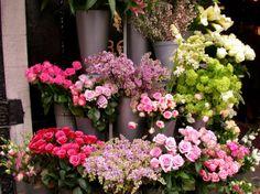 Flower Shop - 1 | Flickr - Photo Sharing!