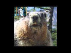 Marmotte Chiante - Prédiction du Printemps - Entrevue Horses, Voici, Animals, Fictional Characters, Retirement, Wish, Pokemon Song, Spring, Animais
