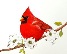 Watercolor illustration Cardinal on Dogwood branch