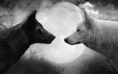 Hilando: Los lobos