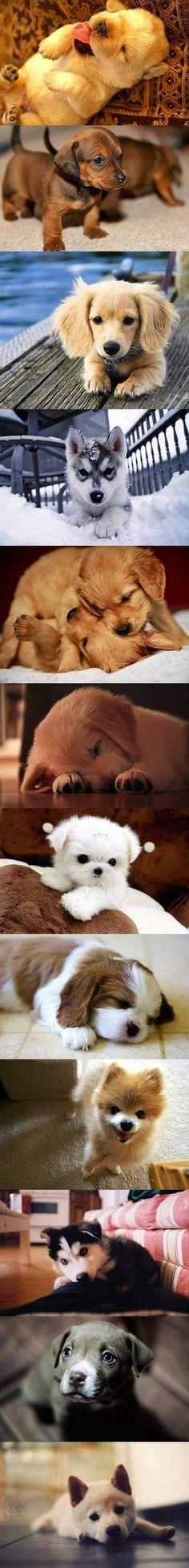Awwwwwww! I want a puppy that stays little.