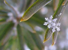 "Beautiful macro snowflake! Seen by KIXX. Gloves ""To protect and Impress"" https://www.facebook.com/kixxsafety  #garden #gloves #tuinhandschoenen"