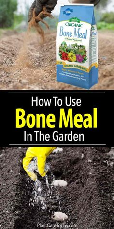 Organic Gardening Steamed bone meal fertilizer, adds phosphorous in the soil helping produce strong roots, increase fruit and flower development.