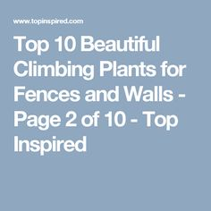 Top 10 Beautiful Climbing Plants for Fences and Walls - Page 2 of 10 - Top Inspired