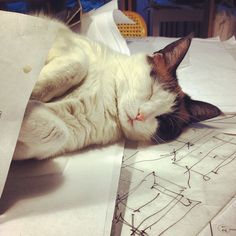 """""""A dog will sit beside you while you work.  A cat will sit on your work."""" --Pam Brown"""