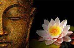 Buda con flor de loto, en Zen Boutique Hotel, Rocha