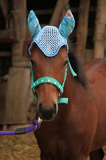 Crochet horse bonnet is so cute!  FREE crochet pattern.