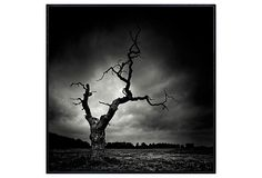 The Last Tree on OneKingsLane.com