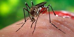 Organização internacional publica sugestão de rotina pré-natal considerando surto de Zika vírus