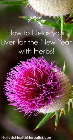 How to Detox your Liver for the New Year with Herbs! holistichealthherbalist.com #detox #health #liverdetox #newyear It's important to know how to detox your liver after overindulgence. Learn which herbs are best at restoring and rejuvenating your liver f