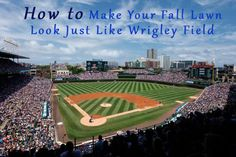 How to Make Your Fall Lawn Look Just Like Wrigley Field  lawn tips nice looking lawn http://www.hgtv.com/design-blog/outdoors/how-to-make-your-lawn-look-like-wrigley-field