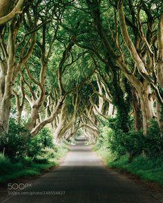dark hedges. armoy. northern ireland. Looked throu ... by tannerwendell via http://ift.tt/1NiFktx