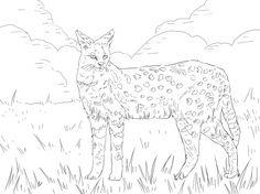 photos tierboskat big cats animals serval free cats pinterest