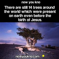 Over 2,000 Years Old! - WOW! jus WOW...