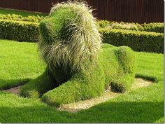 best funny topiary lion with grass mane. If you make a base of chicken wire, you can grown rye in sod over the form Just an idea
